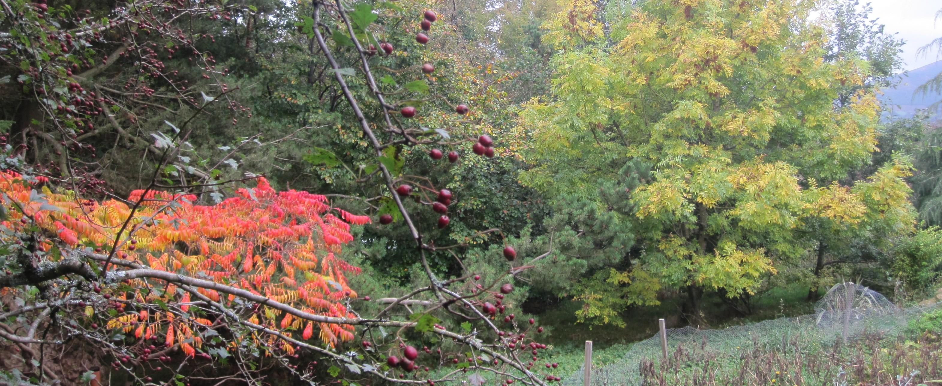 Autumn in Glen of Imaal